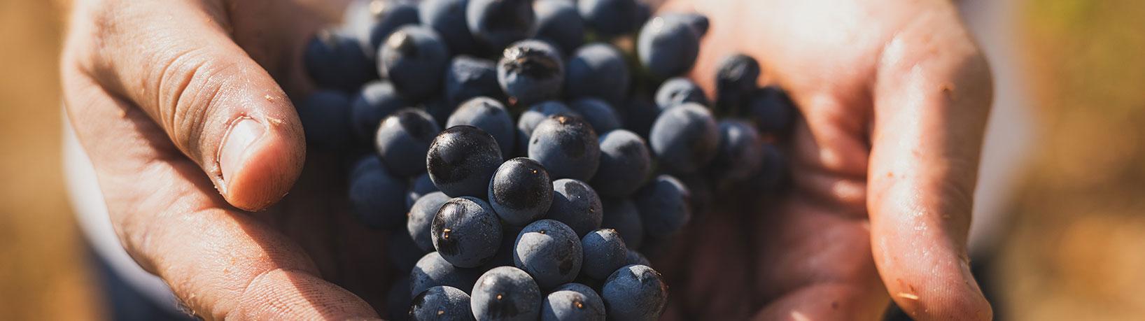 home_wine.jpg